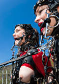 Ponygirls training in heavy harness and bit gags.